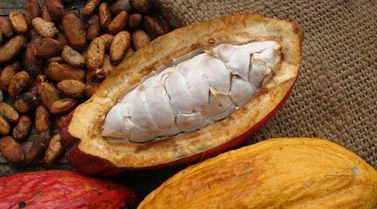 cacao-pods_O